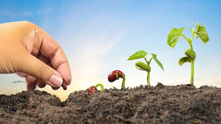 O poder de uma semente